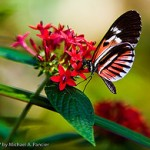   (Butterfly World)